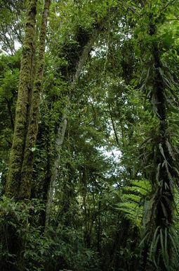 The trees of the cloud forest are covered with epiphytes, which receive their nourishment from moisture in the air.  The moisture condensed by the epiphytes also feeds the trees.