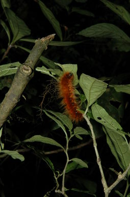 Don't you want to pet this fuzzy caterpillar?  Probably not a good idea.