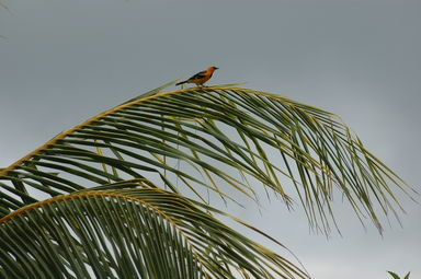 We saw this bird outside our window at Hotel Iguanazul