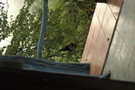 We woke up to a monkey just outside our window at the Hotel Brovilla